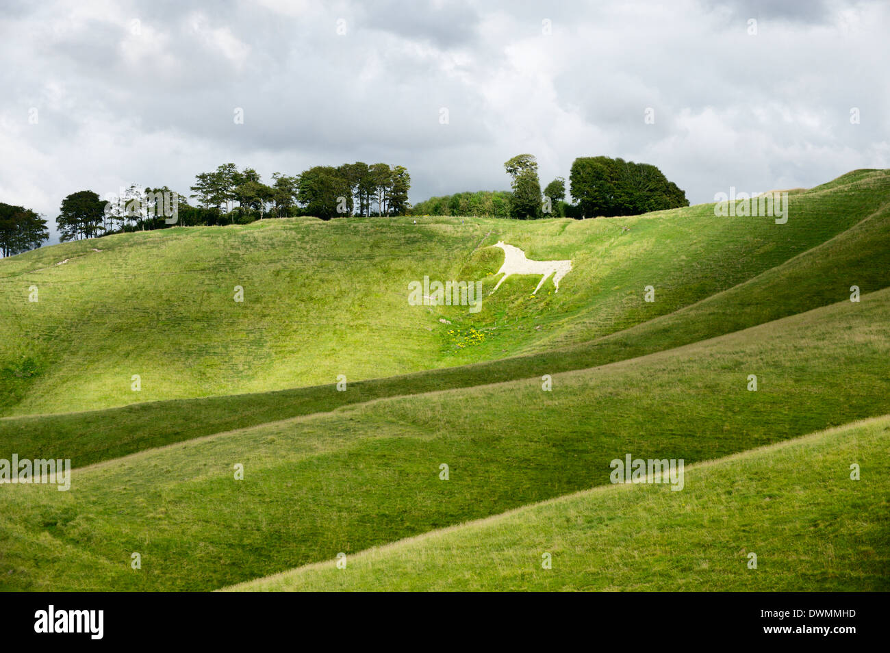 White horse, the Cherhill Downs, Wiltshire, England, United Kingdom, Europe Stock Photo