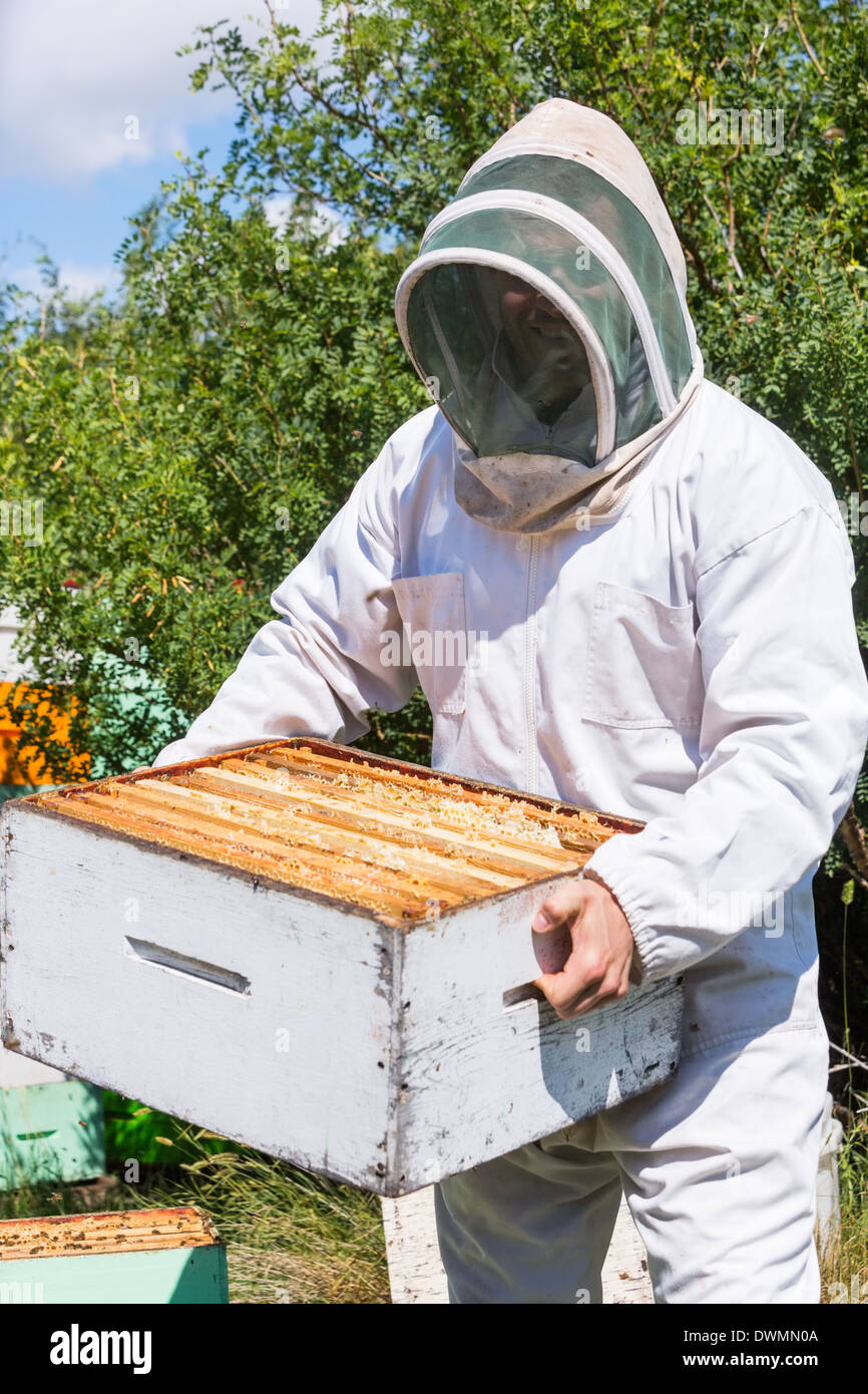 Male Beekeeper Carrying Honeycomb Box At Apiary Stock Photo