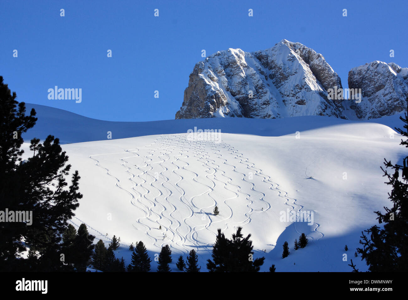 Sci tracks at Seiser Alm / Alpe di Siusi, South Tyrol / Alto Adige, Italy - Stock Image
