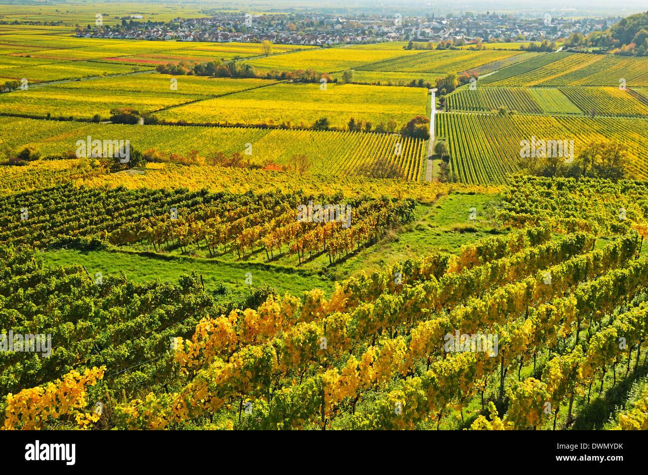 Vineyard landscape, near Bad Duerkheim, German Wine Route, Rhineland-Palatinate, Germany, Europe Stock Photo