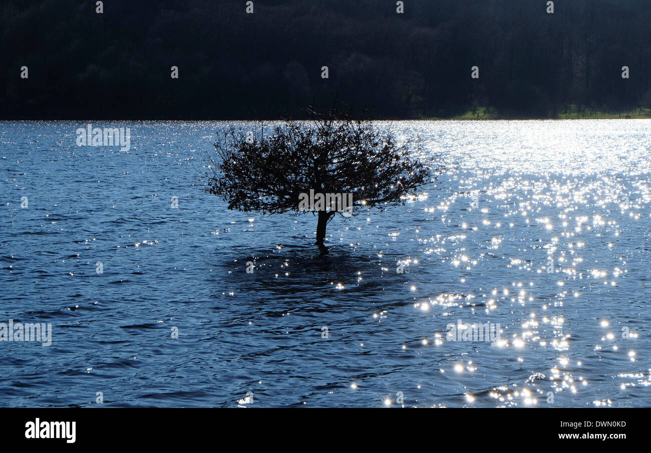single tree in water, lake gast, normandy, france - Stock Image
