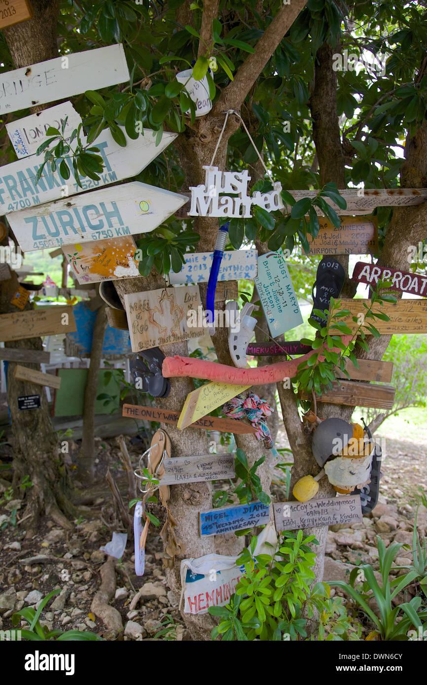 Signs on tree at Mama Pasta's, Long Bay, Antigua, Leeward Islands, West Indies, Caribbean, Central America - Stock Image