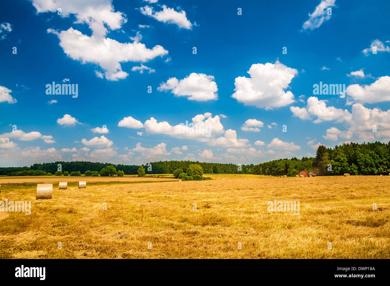 Ricks on the wheat field under blue cloudy sky Stock Photo