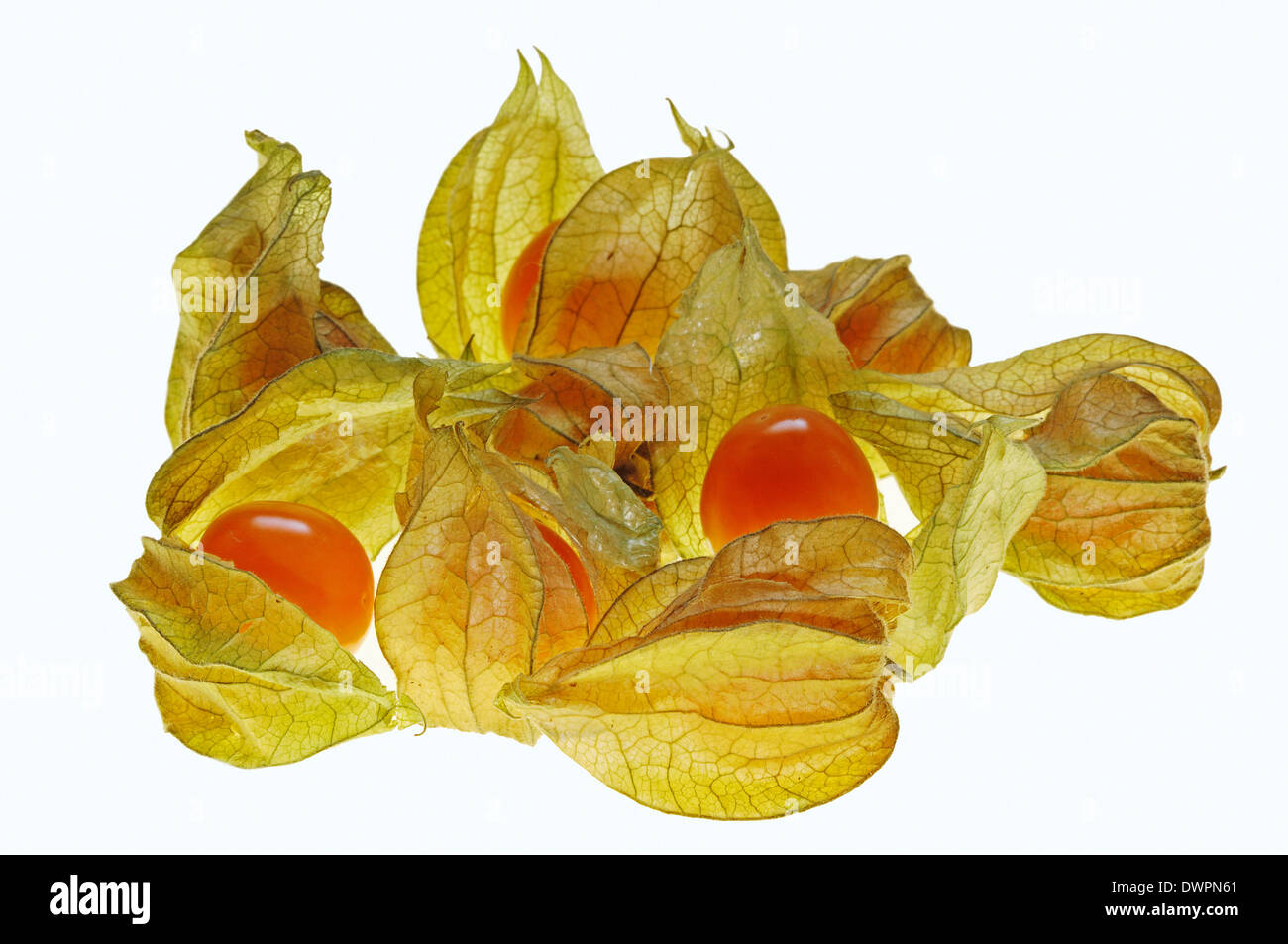 Peruvian Groundcherry Stock Photos & Peruvian Groundcherry