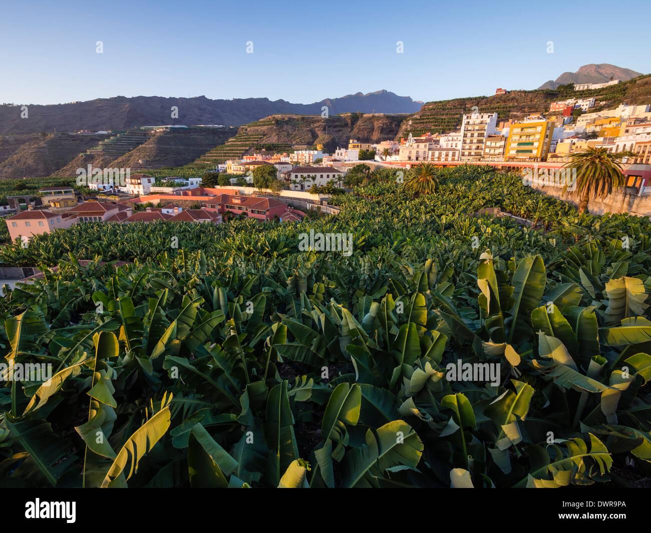A banana plantation in the town of Tazacorte on the Canary Island of La Palma. - Stock Image