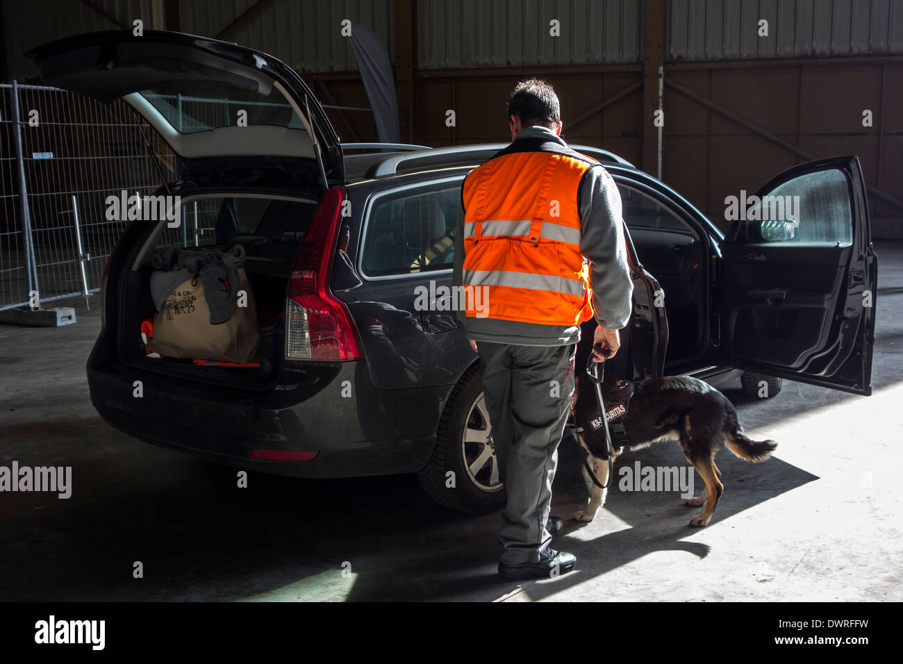 Car being searched for explosives and drugs by handler with explosive-detection dog of the Securitas K9 Explosive Detection Team - Stock Image