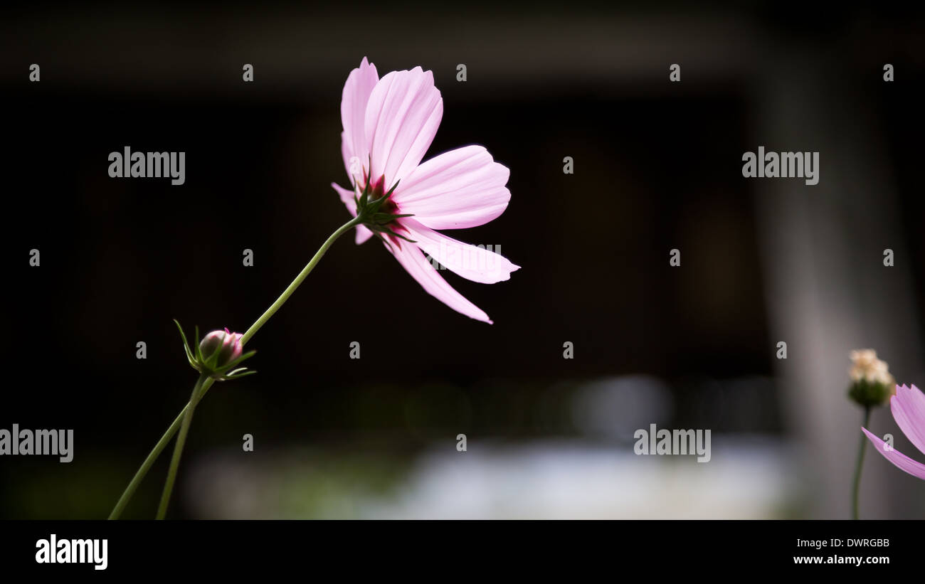 Purple flower in blur background - Stock Image