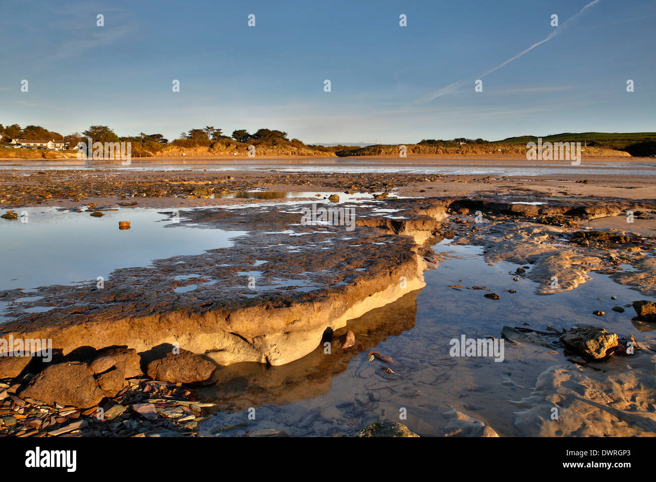 Daymer Bay; Submerged Forest Exposed by Storms; 2014; Cornwall; UK - Stock Image