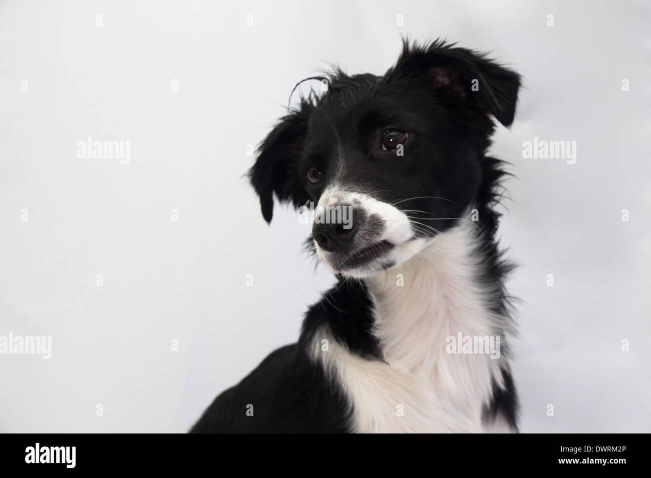 Intrigued dog - Stock Image
