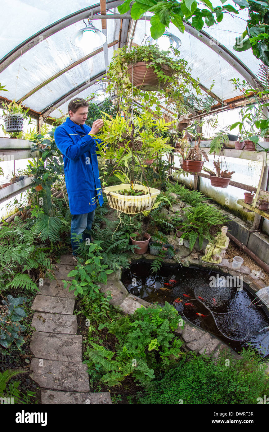 Young scientist is cheсking fern in the greenhouse of South Siberian garden. Altai State University Russia - Stock Image