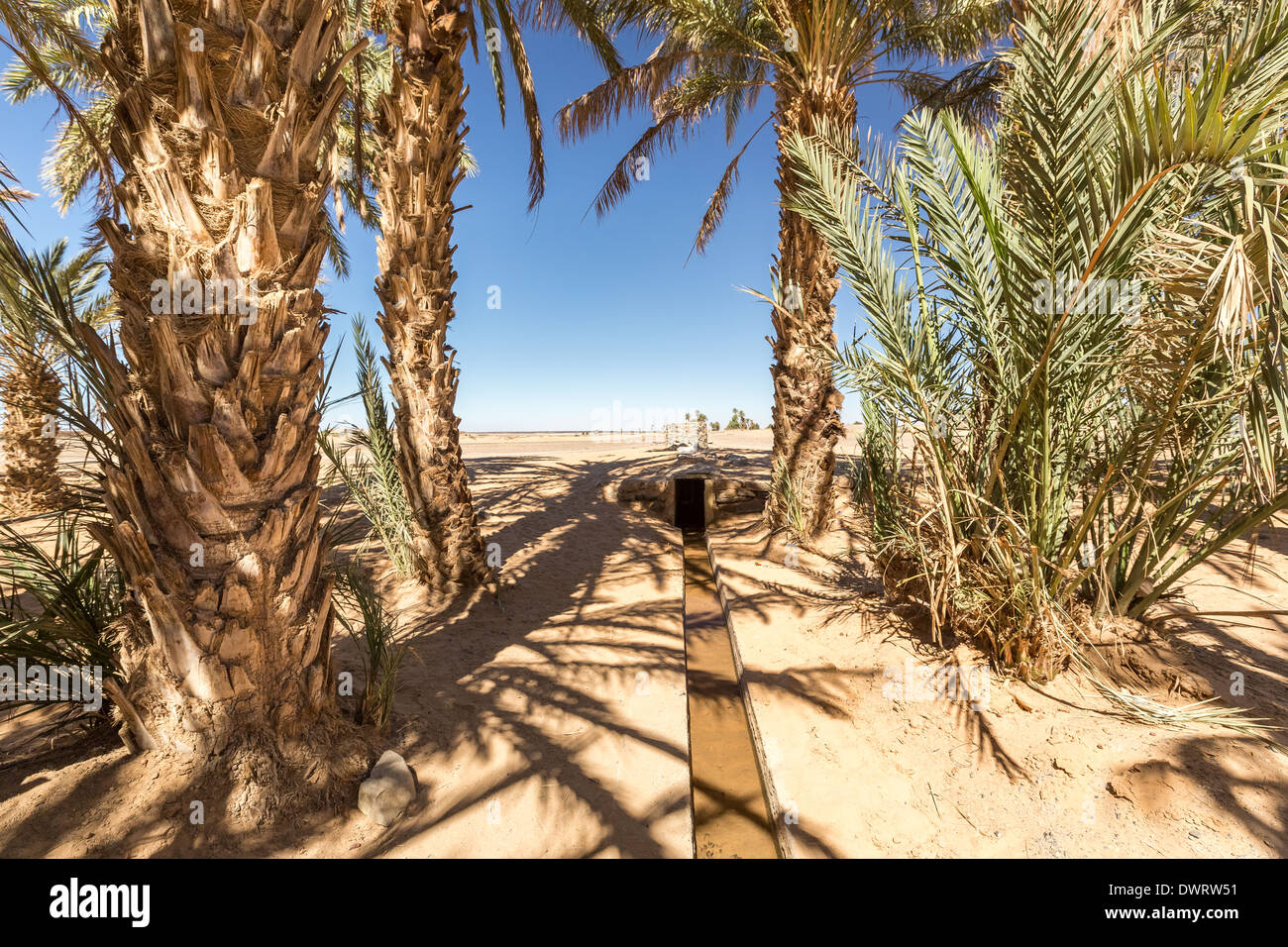 At the edge of oasis and desert, Merzouga, Morocco, Africa - Stock Image
