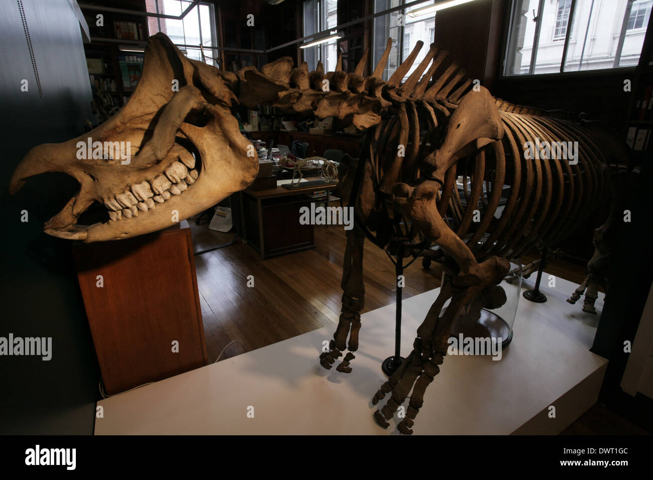 Grant Museum of Zoology and Comparative Anatomy, University College ...