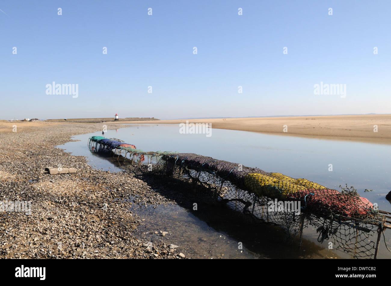 Sacks of mussels on a wire rack Burry Estuary Burry Port Carmrthenshire Wales Cymru UK GB - Stock Image