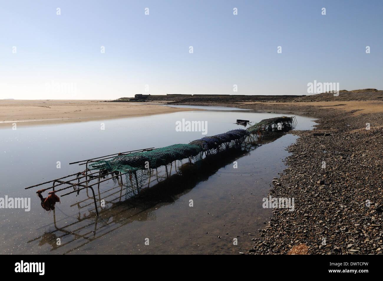 Sacks of mussels on a wire rack Burry Estuary Burry Port Carmrthenshire Wales Cymru UK GB Stock Photo