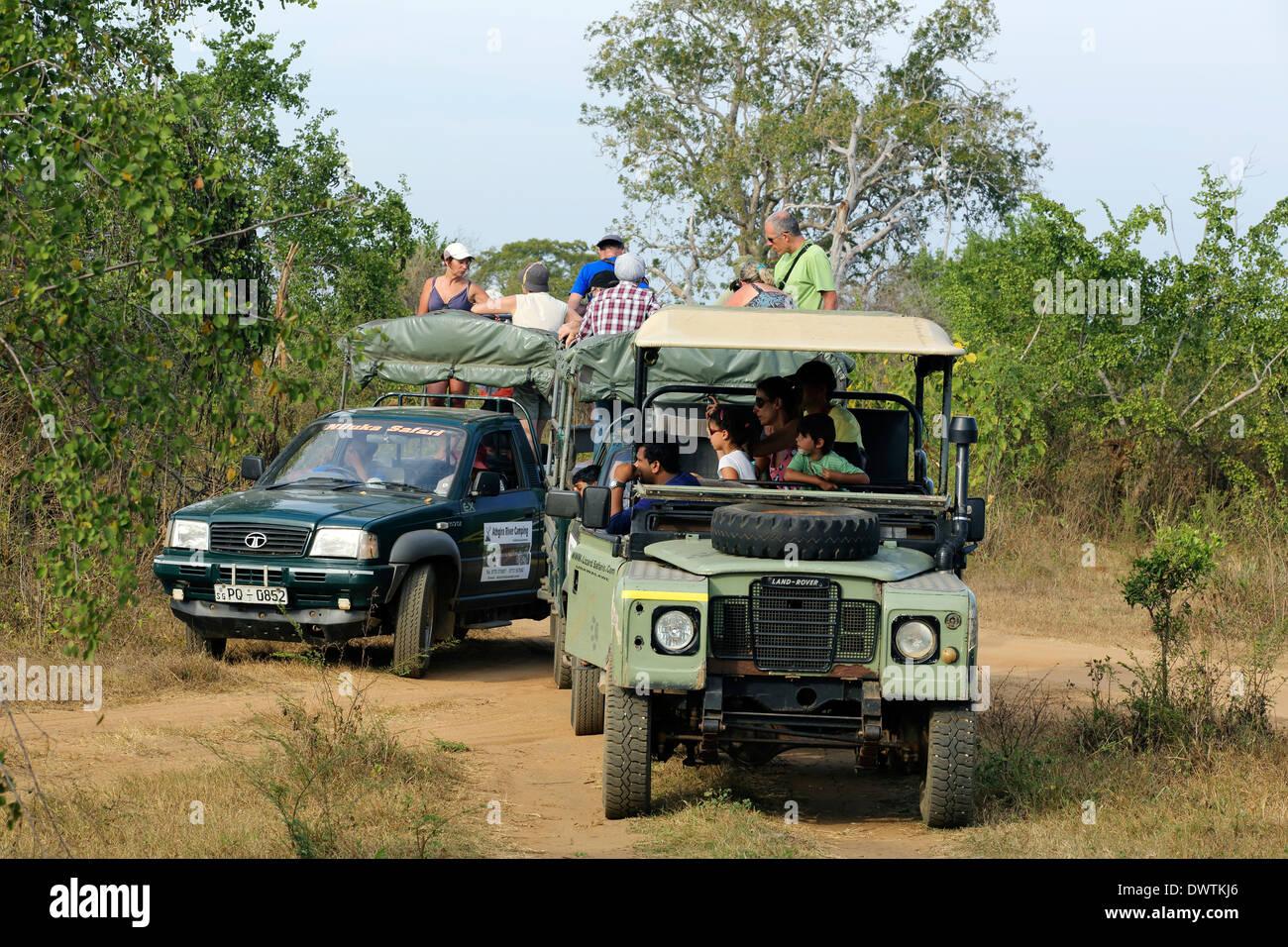 Safari jeeps full of tourists inside Udawalawe National Park in Sri Lanka - Stock Image