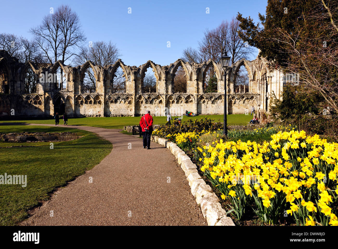 A colourful tourist appreciating Spring flowers in the Botanical Gardens, City of York, Yorkshire, England - Stock Image