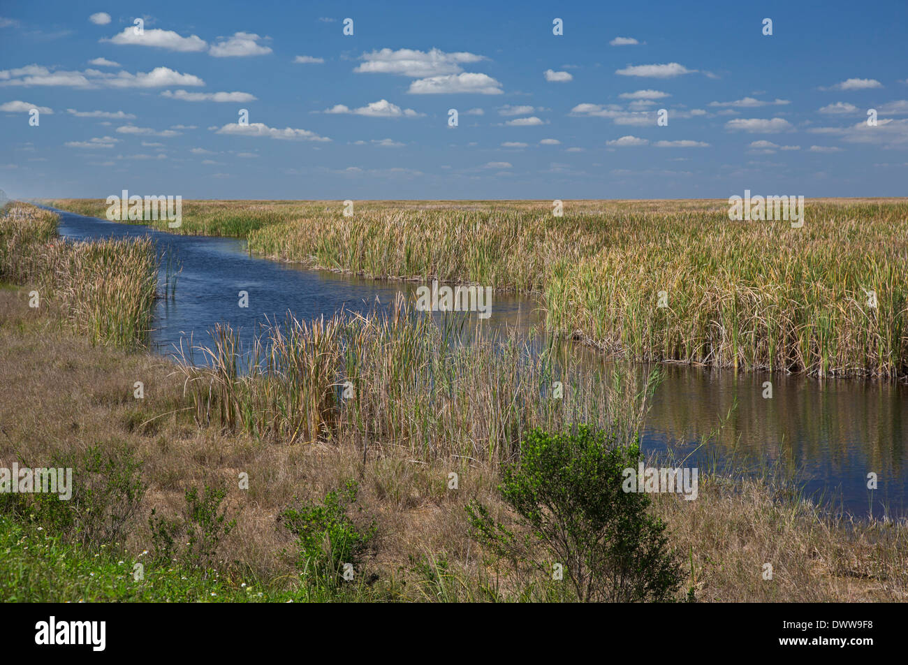 The largest constructed wetland in the world reduces the amount of phosphorus flowing from farmland into the Everglades. - Stock Image