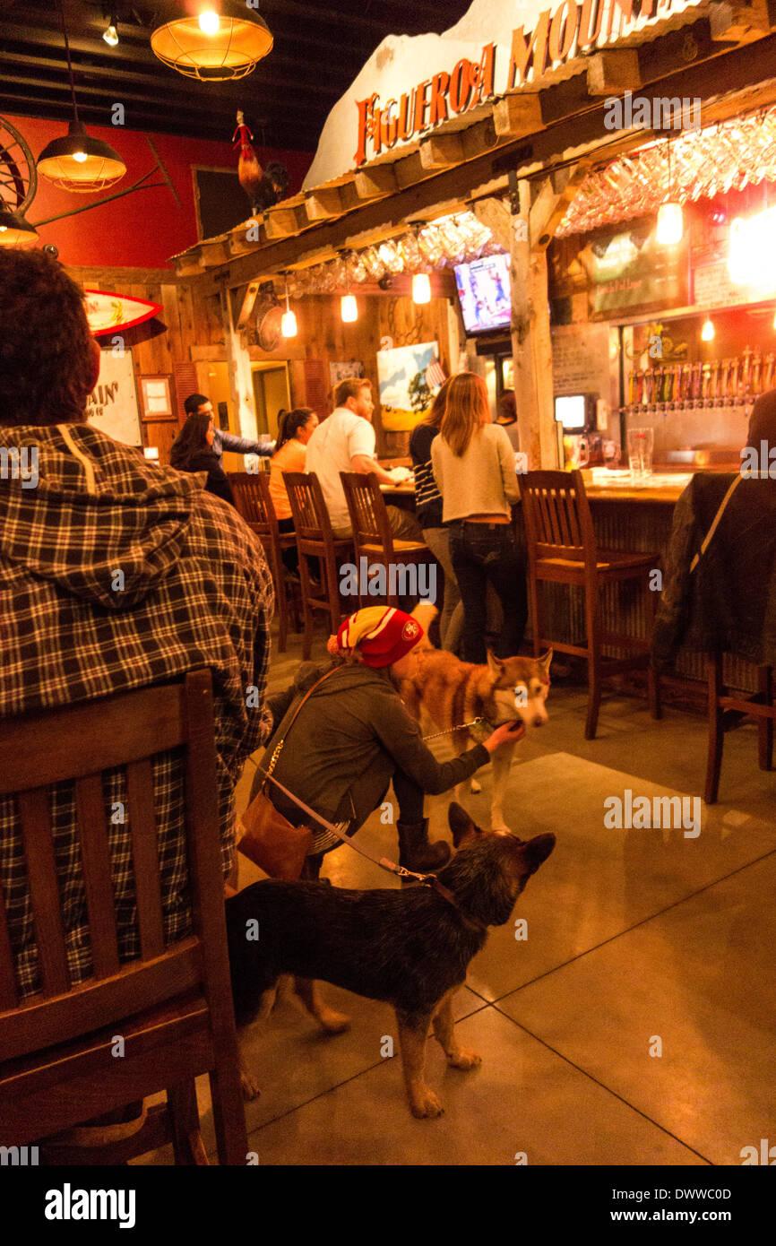 pub dog brewery