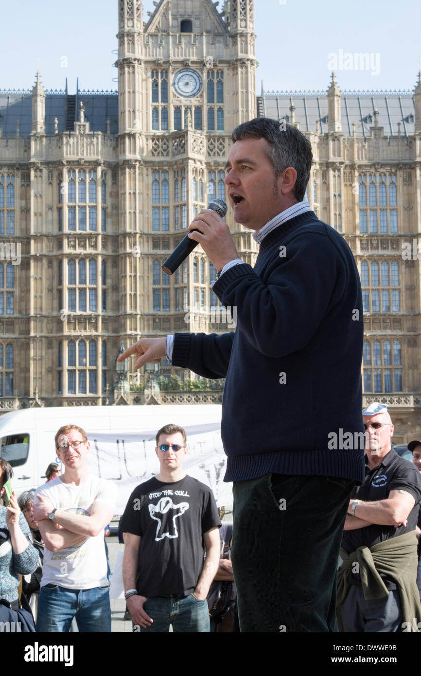 London, UK. 13th Mar, 2014.  Dominic Dyer of the Badger Trust speaks as protesters gather outside Westminster while a parliamentary debate on the controversial badger cull takes place inside the house of commons. Badgers have been linked to the spread of bovine tuberculosis in cattle and experimental culls of badgers were carried out in 2013 in an attempt to stop the spread of the disease. Anti-cull protestors have claimed that the cull is inefficient, inhumane and scientifically flawed. Credit:  Patricia Phillips/Alamy Live News - Stock Image