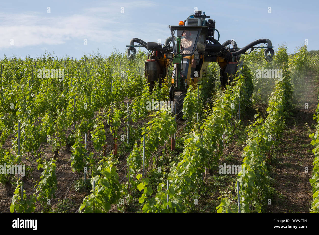 Mechanized spraying of a vineyard with insecticide. Near Reims in the Champagne region of northeast France. - Stock Image