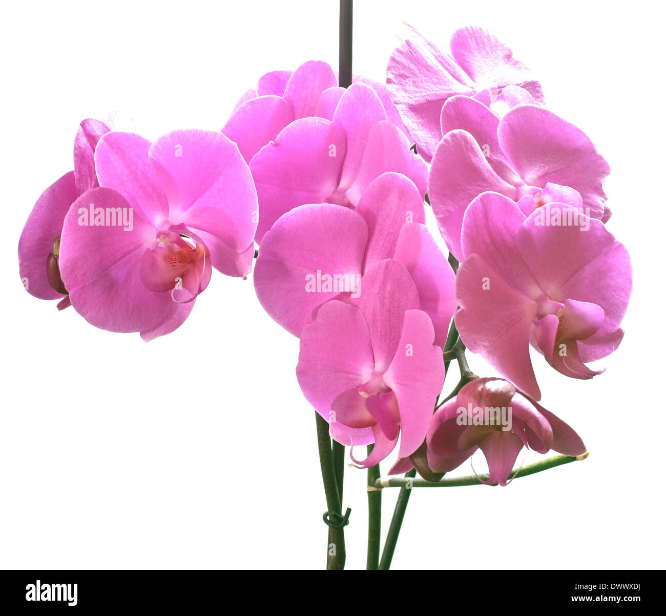 Orchid family, is the largest family of the flowering plants ... on grape plant name, pink hydrangea plant name, christmas red plant name, heroin plant name,