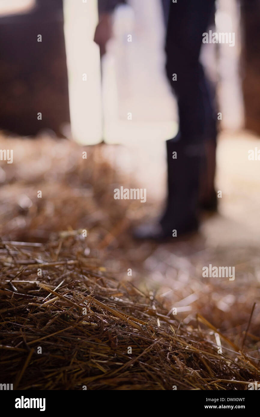 Hay in barn with farmer working in background - Stock Image