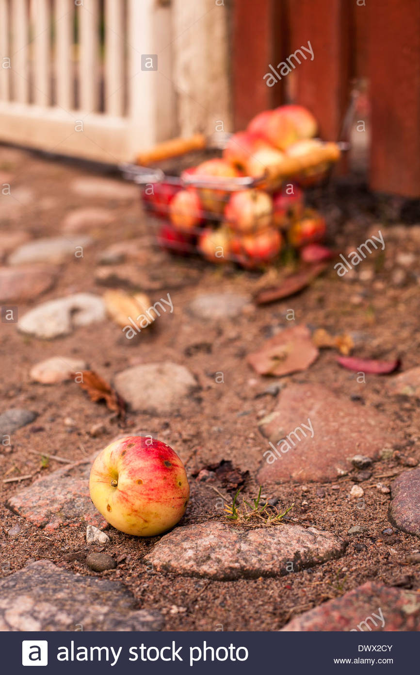 Apple fallen on ground with container in background - Stock Image