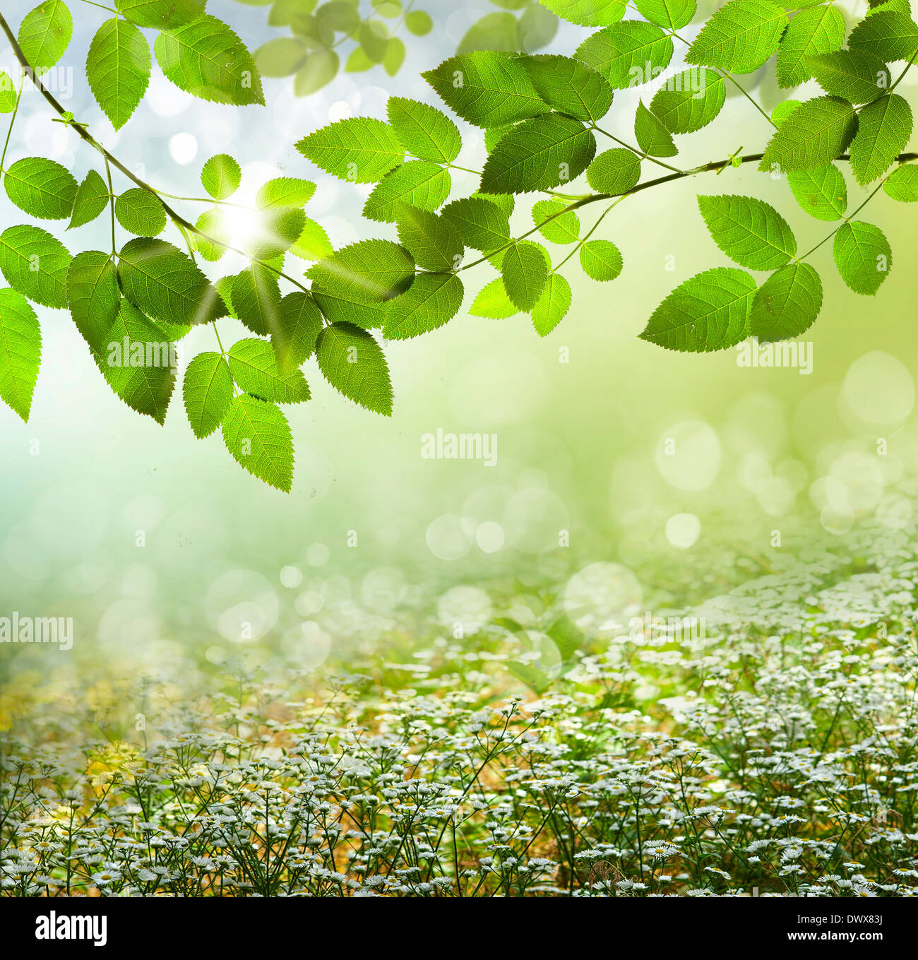 Spring or summer season abstract nature background with grass and blue sky in the back Stock Photo