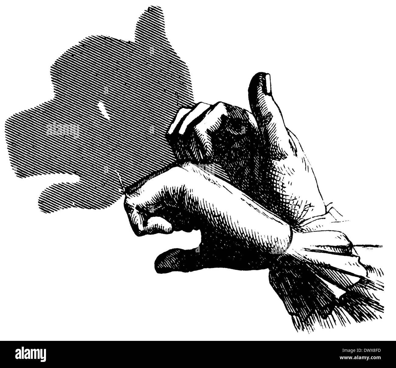 Shadow Play: Dog - Stock Image
