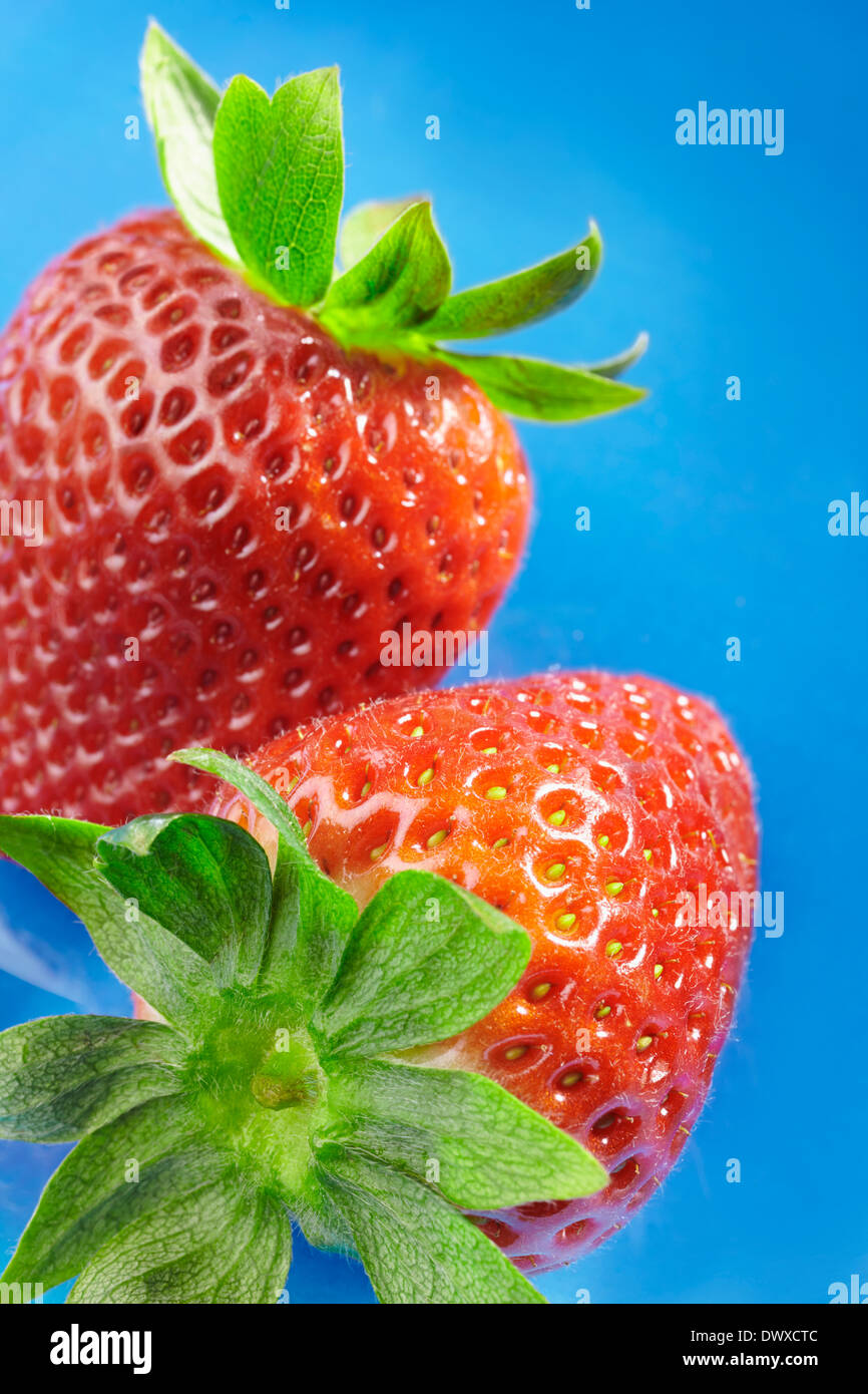 Close-up view of two strawberries on blue background. - Stock Image