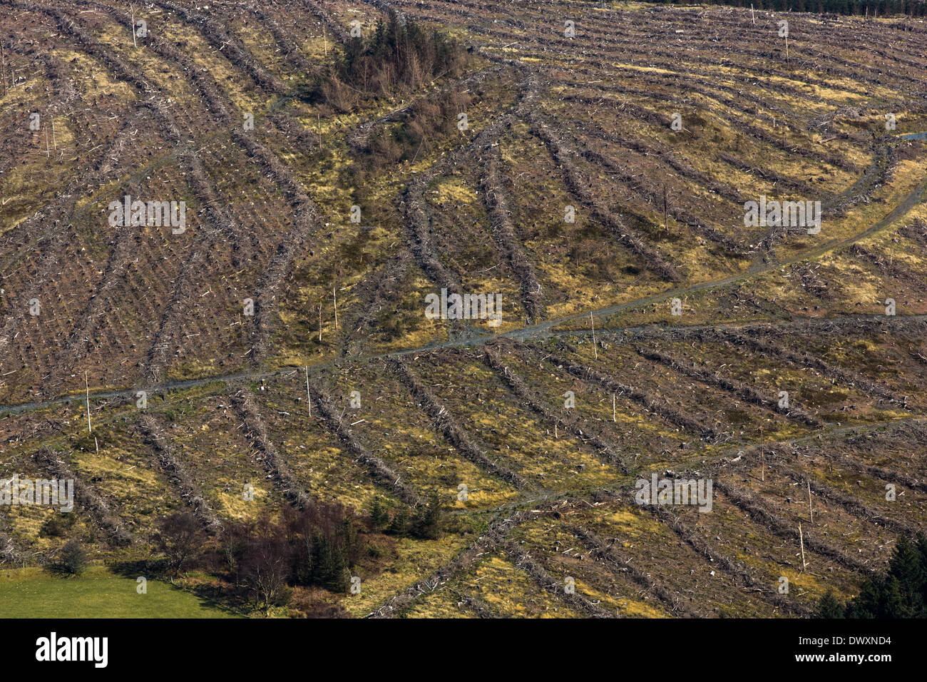 Abstract ridge patterns formed by forestry operations on a mountainside in mid Wales - Stock Image