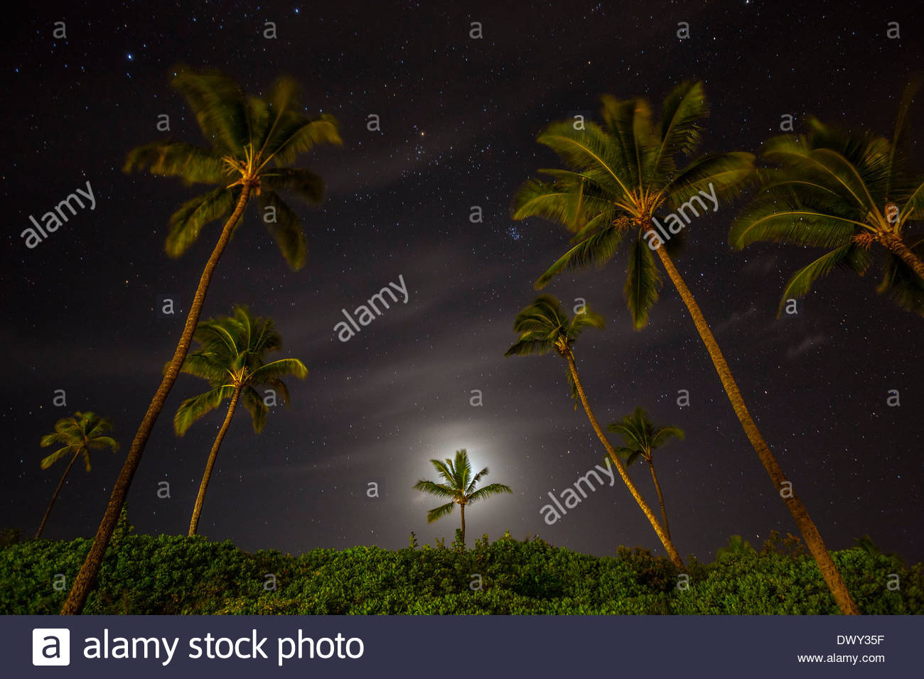 The moon glows behind a coconut palm tree (Cocos nucifera) as thousands of stars shine above Makena Beach on the island of Maui. - Stock Image