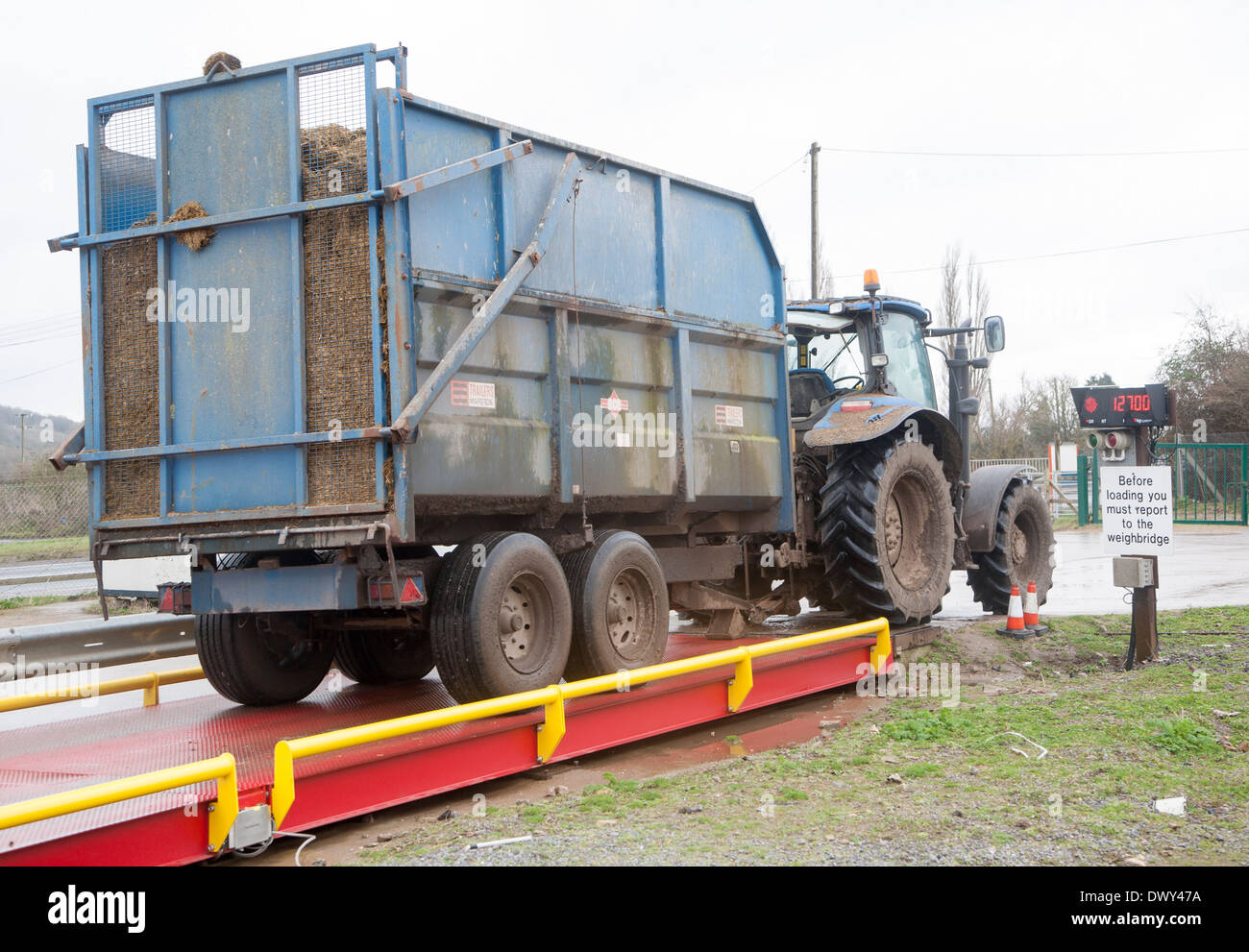 Tractor and trailer on a weighbridge weighing its load, UK - Stock Image