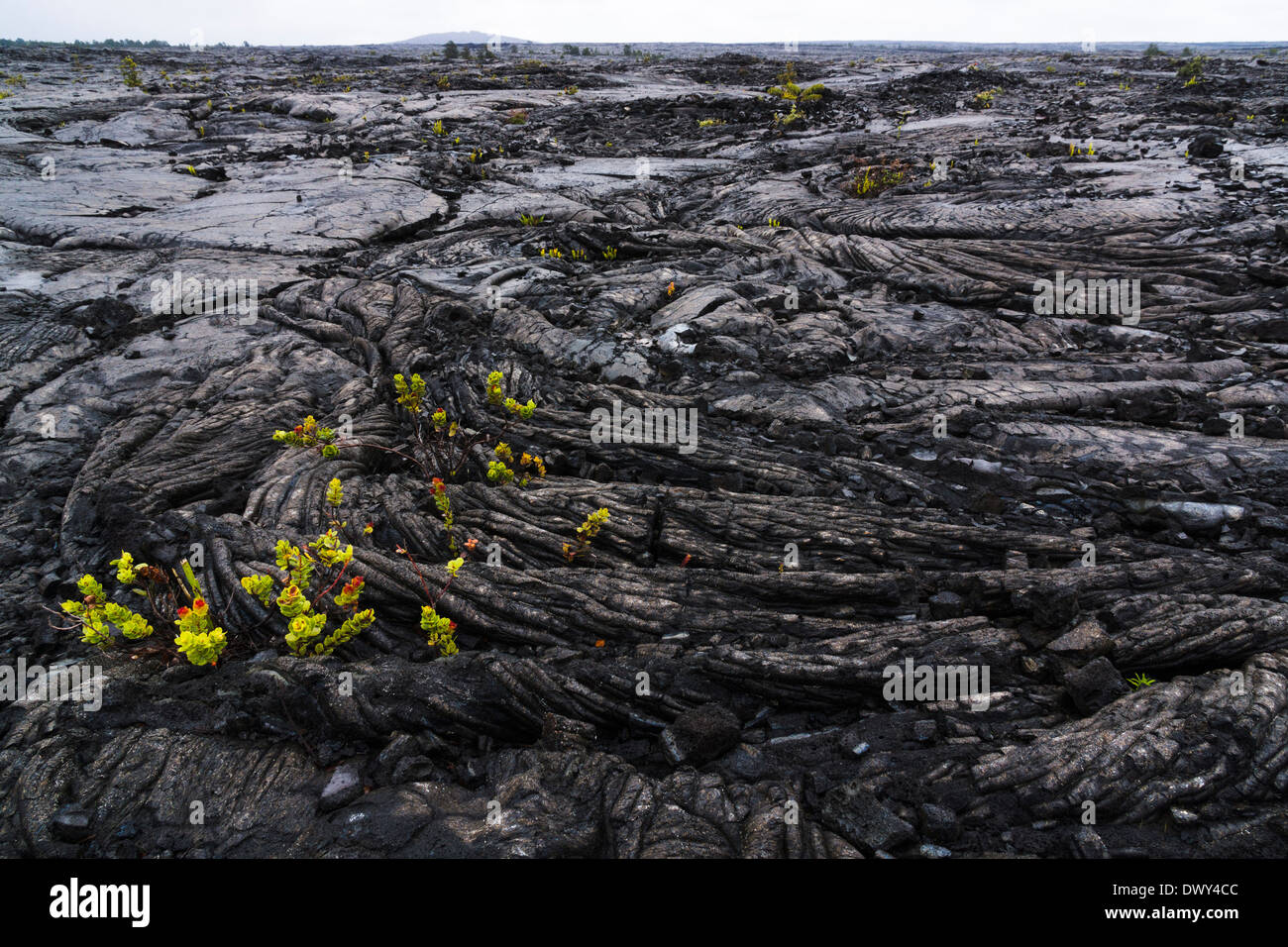 Pāhoehoe ('smooth, unbroken lava'). Hawaii Volcanoes National Park, Big Island, Hawaii, USA. - Stock Image