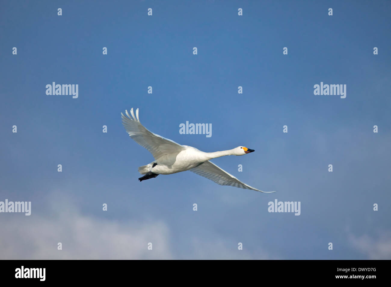 Birds Flying in the Sky - Stock Image
