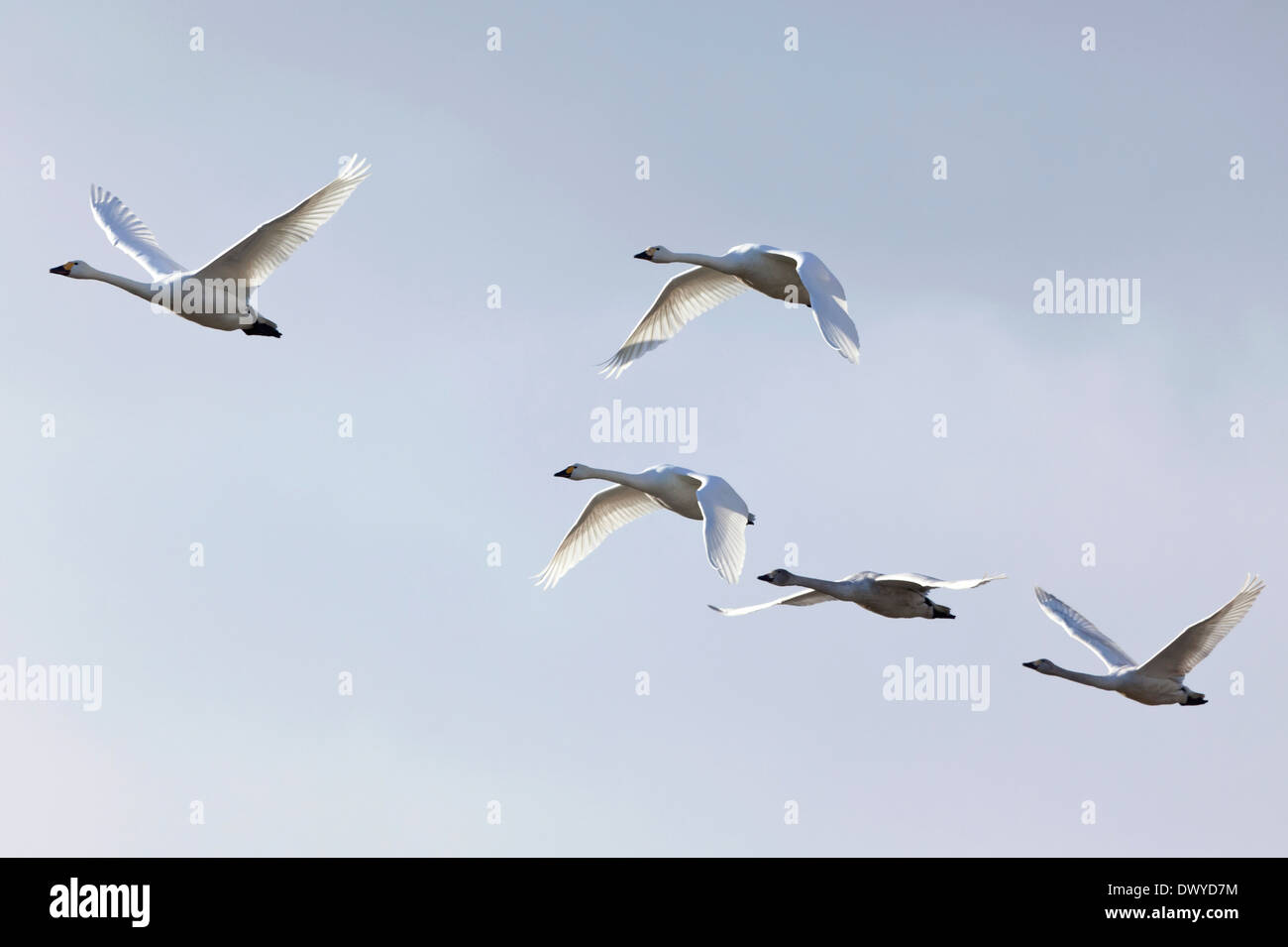 Birds Flying in the Sky Stock Photo
