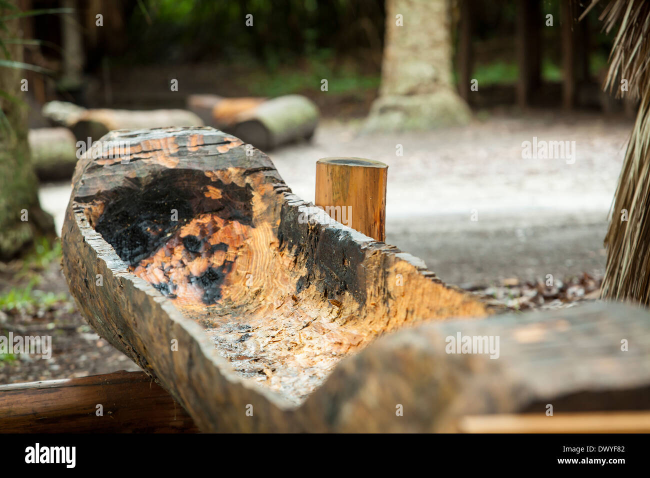 A replica of a Timucua canoe is pictured in St. Augustine Fountain of Youth Archaeological Park, Florida - Stock Image
