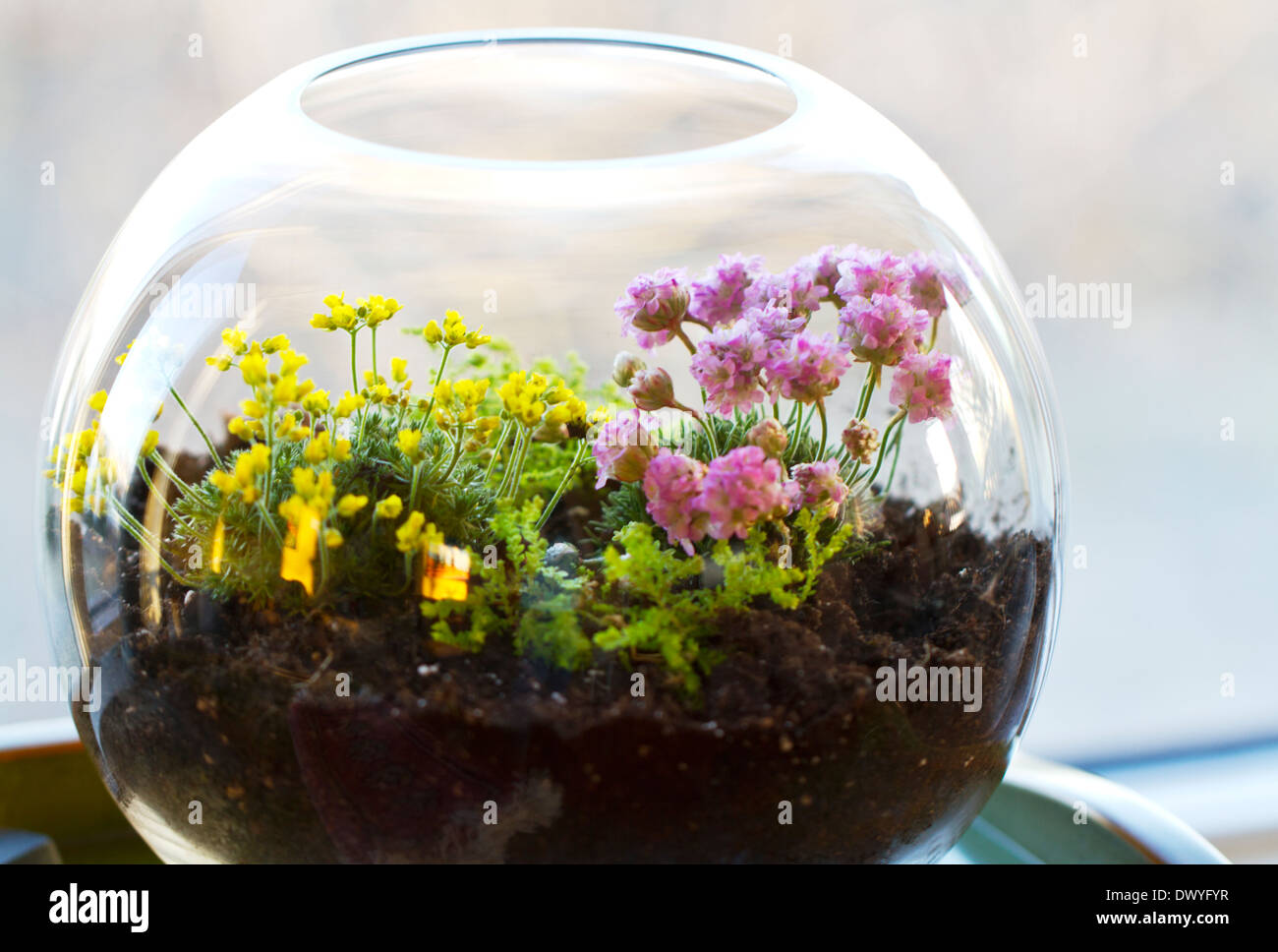 A Small Glass Terrarium With Plants Inside Stock Photo 67602747 Alamy