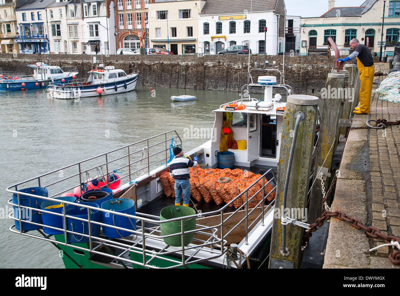 Unloading a catch of shellfish from a small fishing boat in the harbour, Ilfracombe, north Devon, England - Stock Image