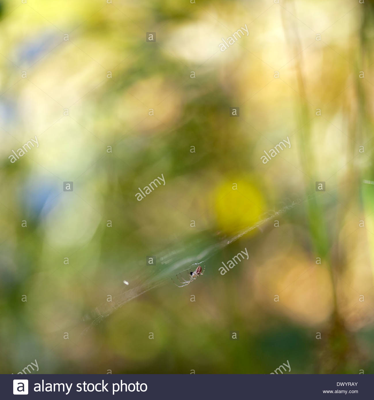A spider waiting - Stock Image