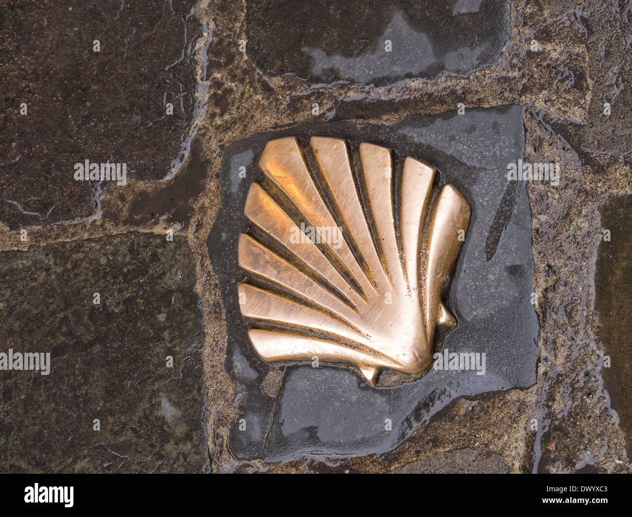 A brass scallop shell set into the pavement in Brussels, Belgium. This is a marker for the Way of St. James pilgrimage walk. - Stock Image