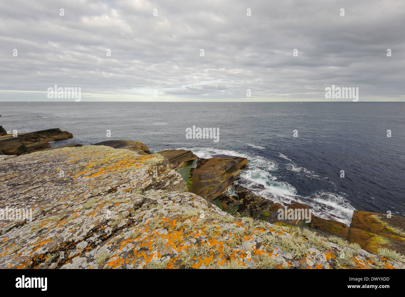 Layered sandstone rocks with lichen on the coast at Wick, Caithness, north Scotland. - Stock Image