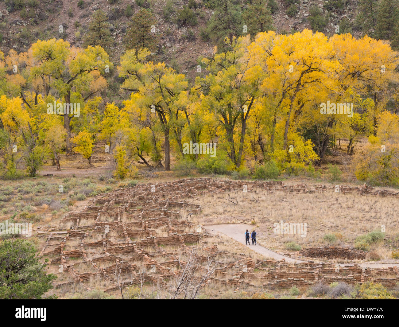 Cottonwood trees in the canyon at the Bandelier National Monument Park, New Mexico, USA. - Stock Image