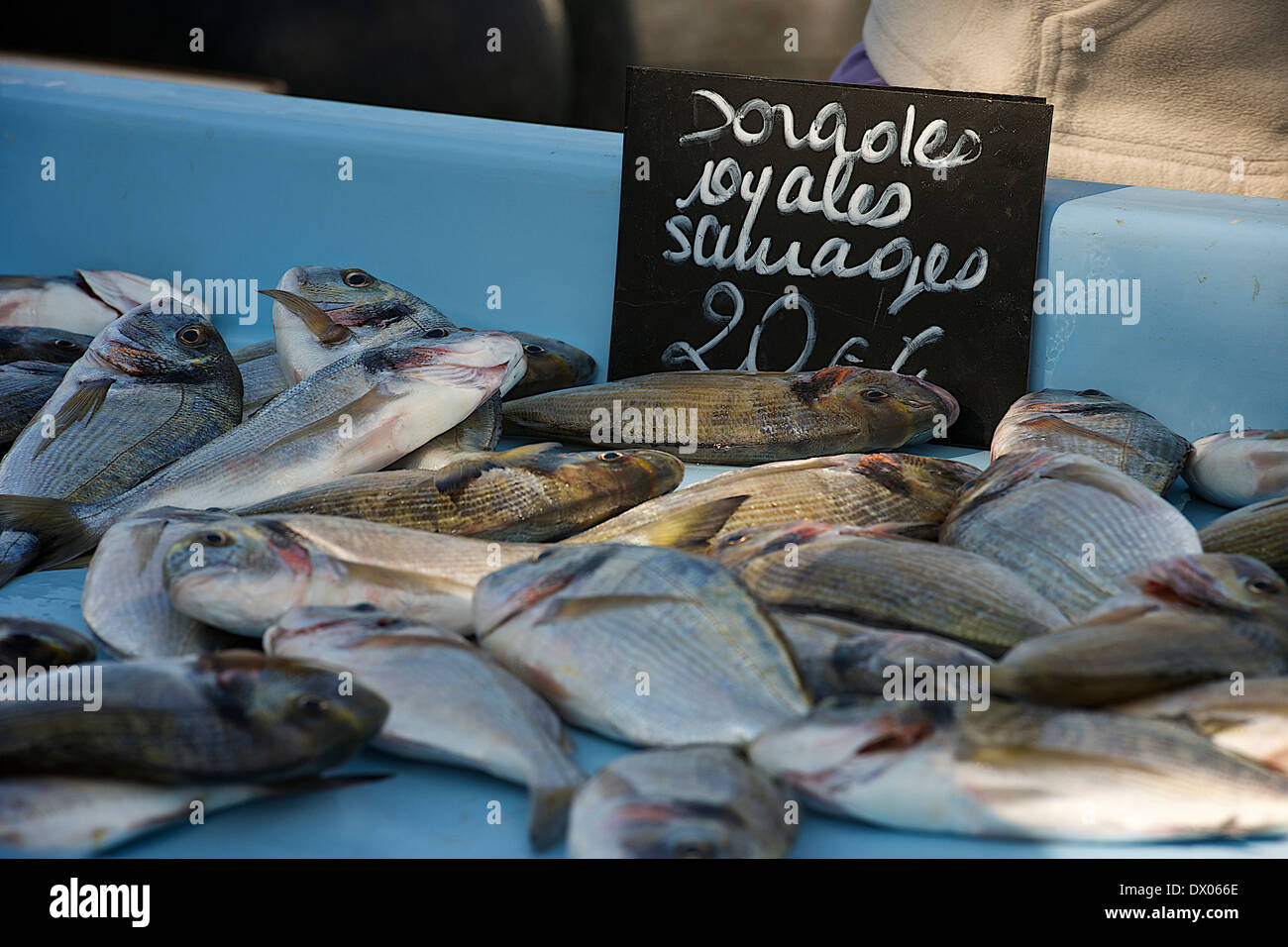 Fresh red snapper at fish market Stock Photo