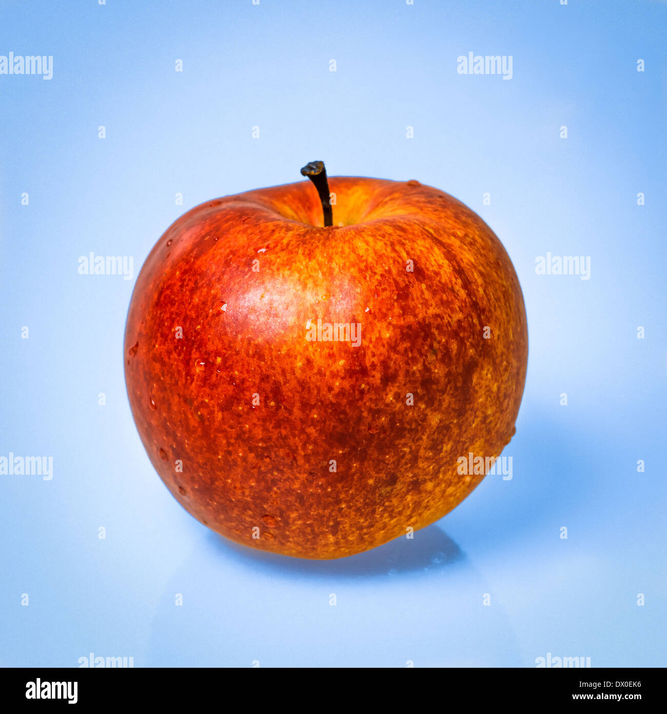 Red apple fruit against light blue background. Single object. Square format photography. - Stock Image