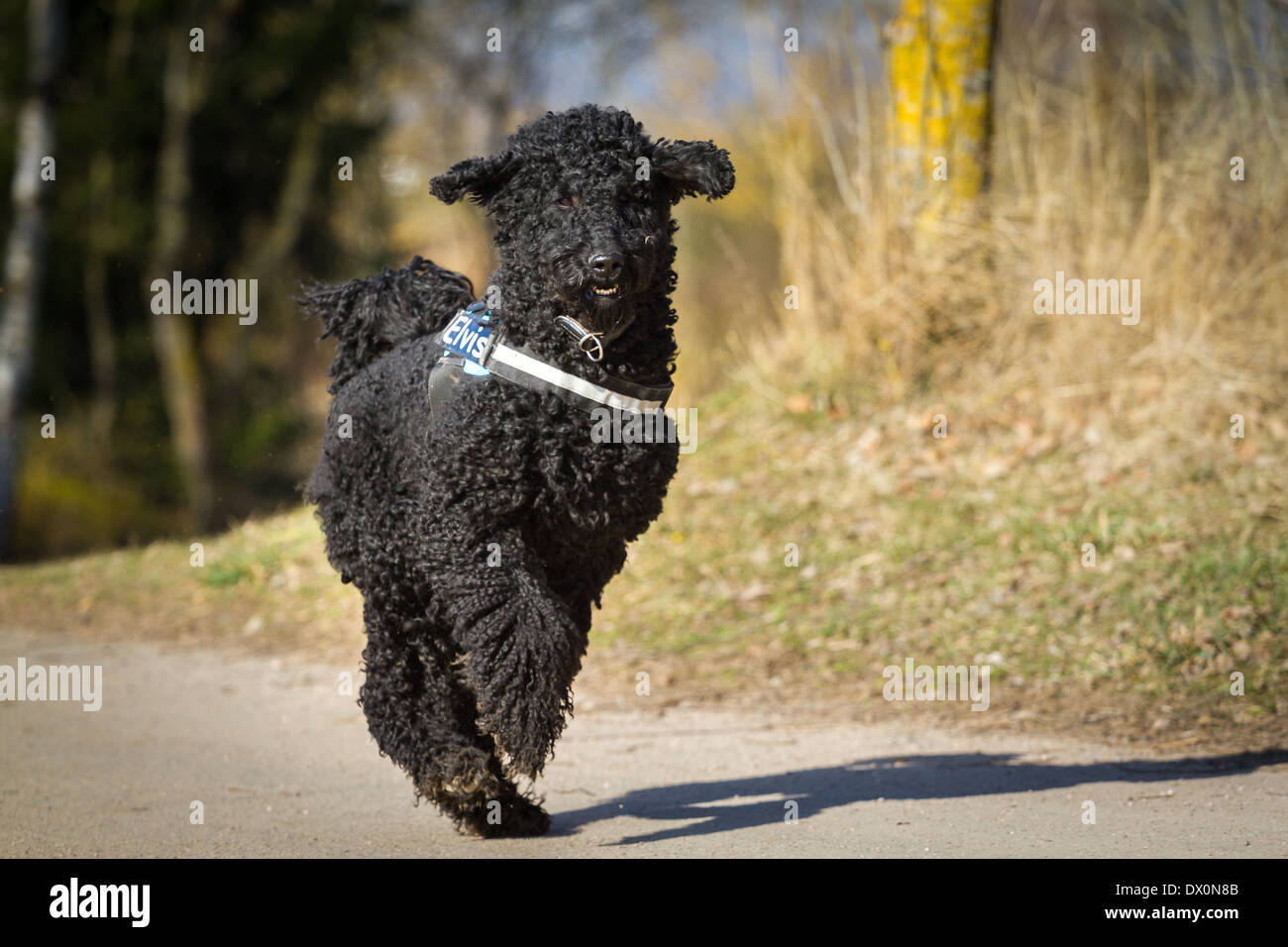 Attractive Poodle Wall Art Images - The Wall Art Decorations ...