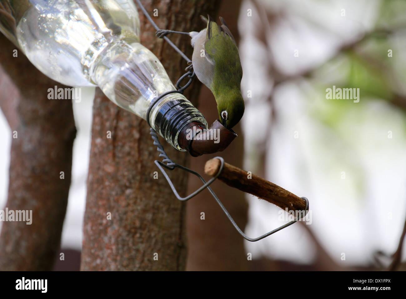 Feeder Bottle Stock Photos & Feeder Bottle Stock Images - Alamy