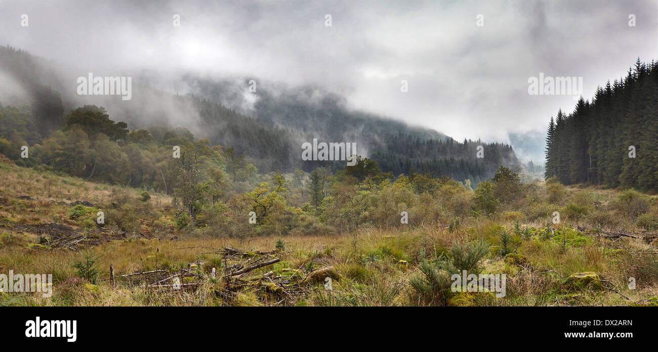 Broadleaf and pine trees at Glenbranter Forest. - Stock Image