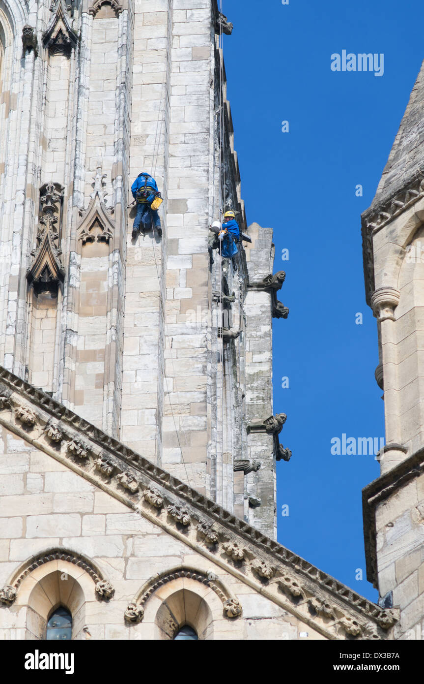 Stonemasons abseiling to repair York MInster or cathedral,  England, UK Stock Photo