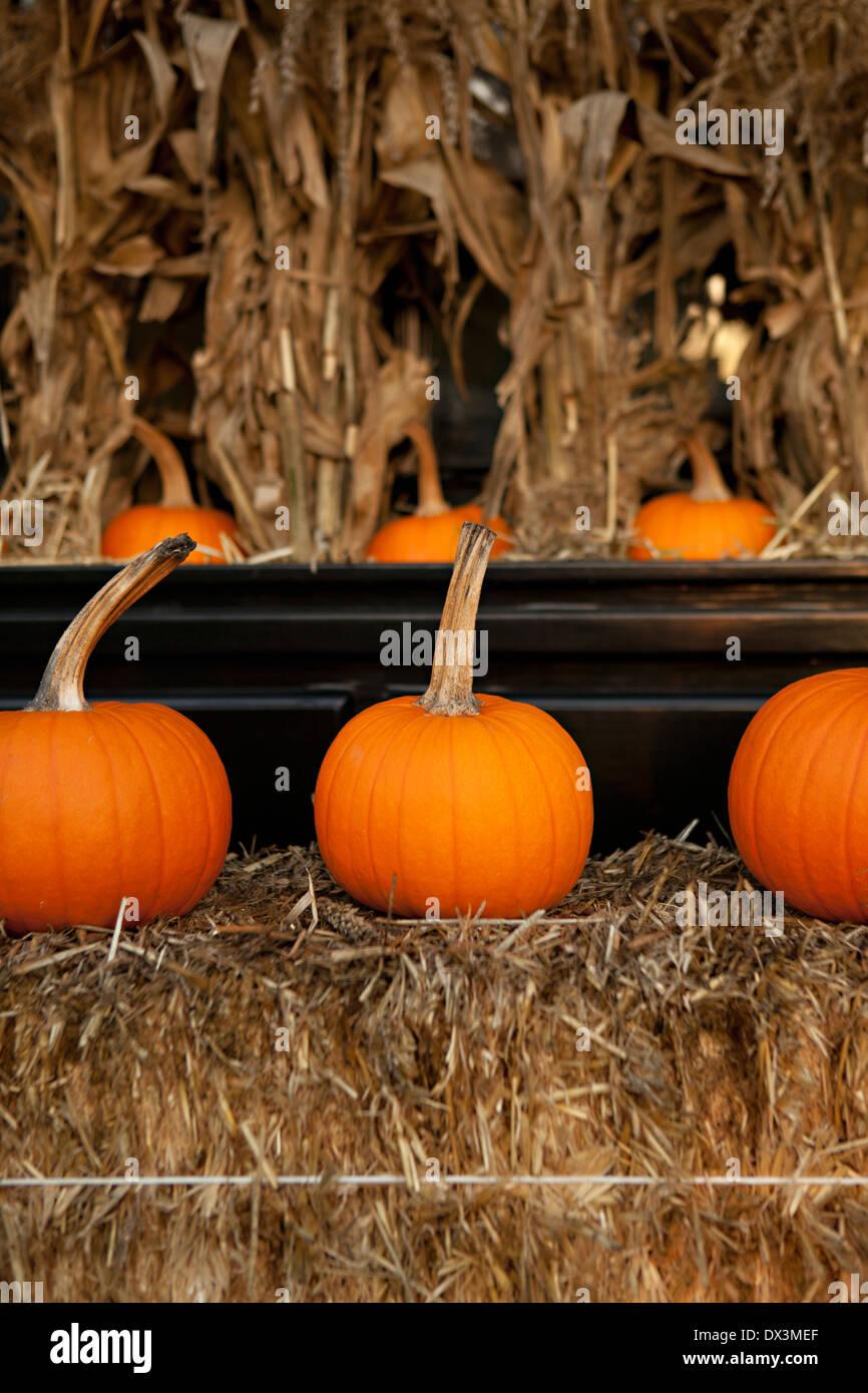 Autumn pumpkins around hay bale display - Stock Image